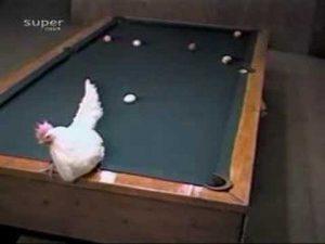 Chicken Billiards