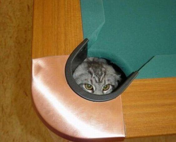 Critter Hiding Spot